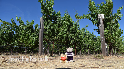 Travelling Bears at the Landmark Vineyards in Sonoma Valley, 