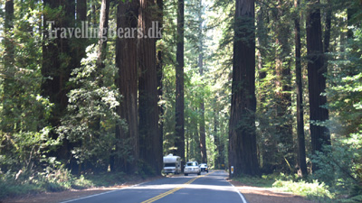 Travelling Bears at the Avenue of the Giants, Philipsville, 