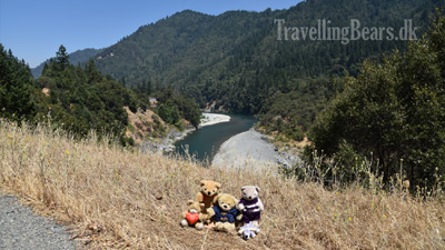 Travelling Bears taking a selfie on Highway 299, 